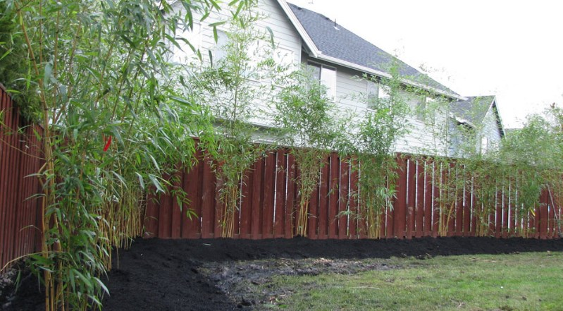bamboo-in-the-ground