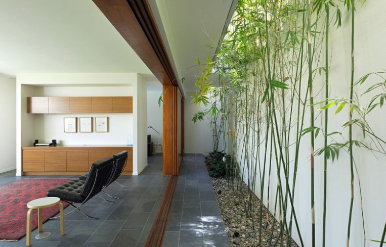 planting-bamboo-at-home