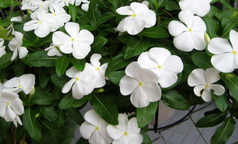 100 Types Of The Most Beautiful White Flowers For Your Garden Home