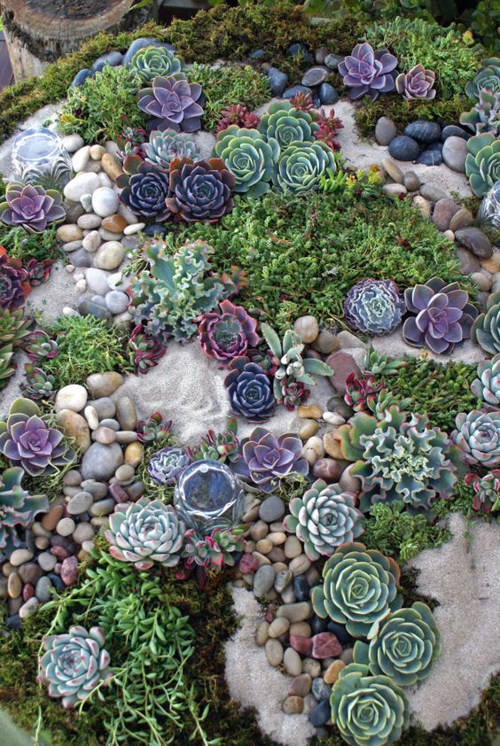 rock garden with hens and chicks