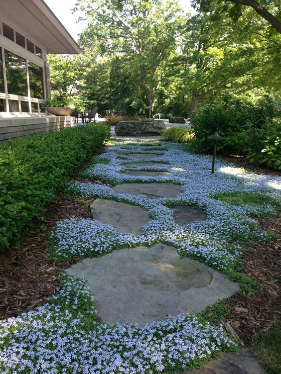 rock garden with rock cress