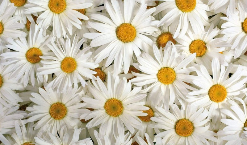 100 types of the most beautiful white flowers for your garden home 100 types of the most beautiful white flowers for your garden home and gardens mightylinksfo