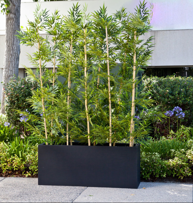 bamboo grove privacy screen in modern fiberglass planter