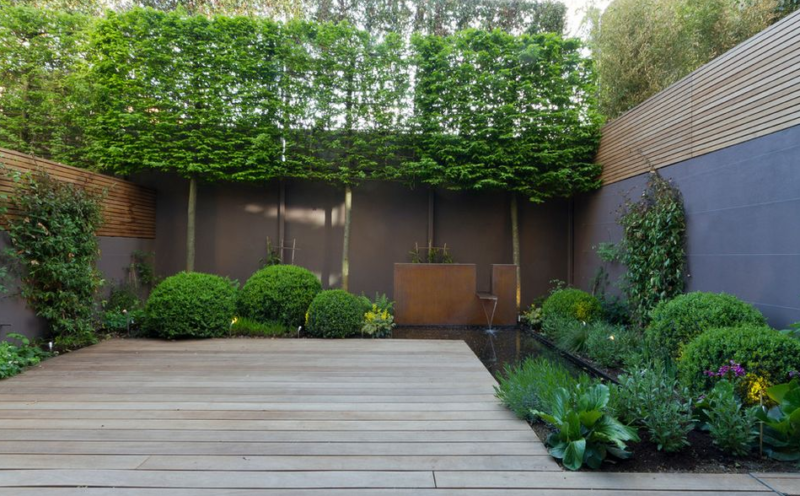 hedge walls privacy screen