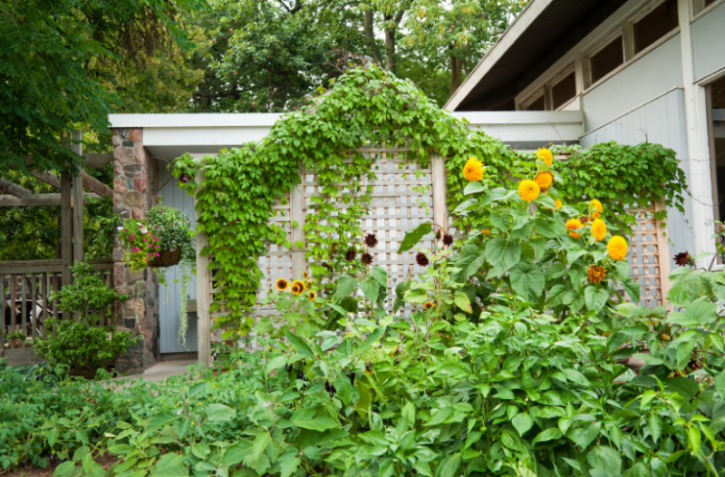 Outdoor Privacy Screen With Vines