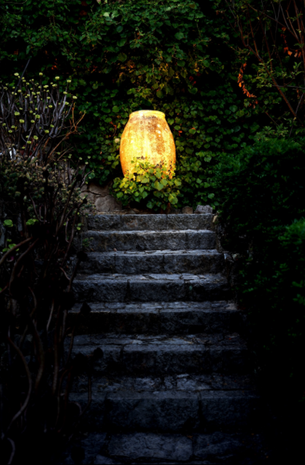 Light Plants Outdoor Lighting