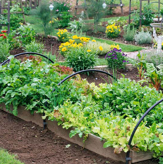 Add a Makeshift Cold Frame to Your Raised Garden Beds