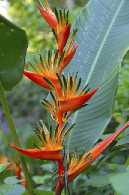 Different Types of Flowers - Birds Of Paradise