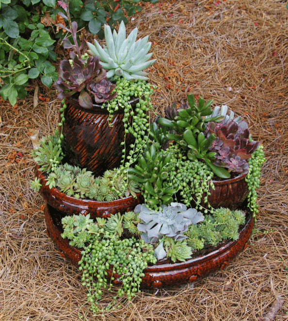 Picture Perfect Mini Succulent Tower