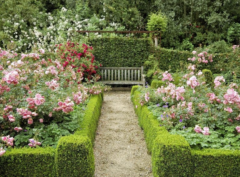 garden design ideas - Rosebushes