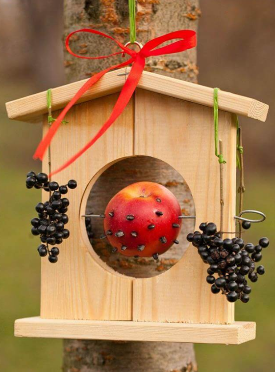 Bird Feeders With Fruits And Seeds