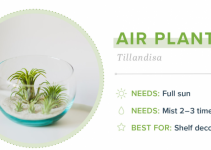Small Indoor Plants - Air Plant