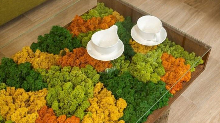 Indoor Moss Decorative Ideas 11