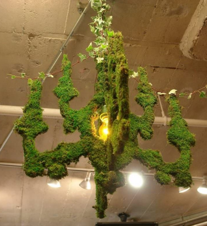 Indoor Moss Decorative Ideas 6